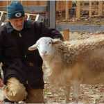 Carl Schwink, Co-Founder of Graze in Peace Farm Animal Rescue