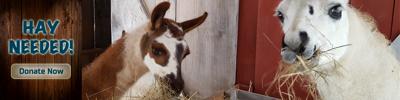 Graze in Peace Farm Animal Rescue and Learning Center